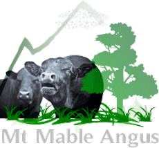 Mt Mable Angus